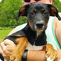 Adopt A Pet :: Scotty - Sussex, NJ