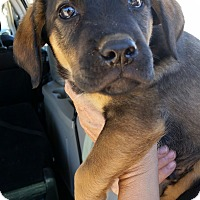 Adopt A Pet :: Kosmo - Tucson, AZ