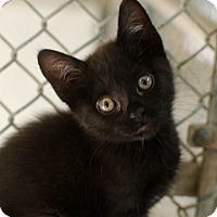 Adopt A Pet :: Gladys - Greenwood, SC