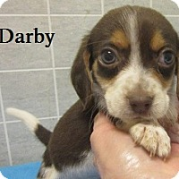 Adopt A Pet :: Darby - Bartonsville, PA