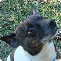 Adopt A Pet :: Howie - Erwin, TN