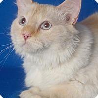Adopt A Pet :: McLovin - Gilbert, AZ