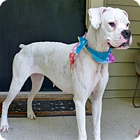 Adopt A Pet :: Mimosa - Baton Rouge, LA