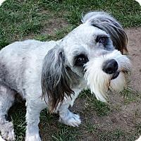Adopt A Pet :: Sasha - Modesto, CA
