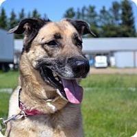 Adopt A Pet :: Margo - Saskatoon, SK