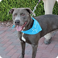 Adopt A Pet :: SOLDIER - Las Vegas, NV