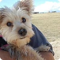 Adopt A Pet :: Tunka - Peyton, CO