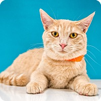 Adopt A Pet :: Peaches - Chandler, AZ