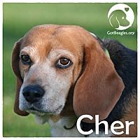Adopt A Pet :: Cher - Novi, MI