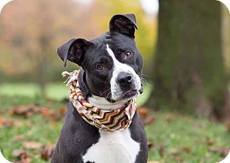Terrier (Unknown Type, Medium) Mix Dog for adoption in Flint, Michigan - Bruce