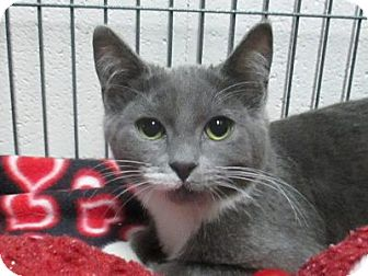 Domestic Shorthair Cat for adoption in Lloydminster, Alberta - Grim