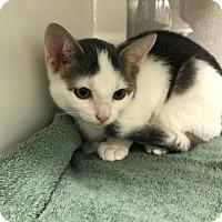 Adopt A Pet :: Peanut - Sarasota, FL