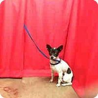 Adopt A Pet :: Ryan URGENT - San Diego, CA