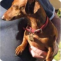 Adopt A Pet :: Husker - Garden Grove, CA