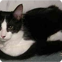 Adopt A Pet :: Alice - Catasauqua, PA