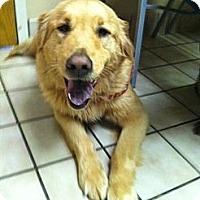 Adopt A Pet :: Mistletoe - Foster, RI