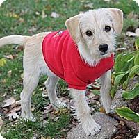 Adopt A Pet :: Ziggy - Louisville, KY