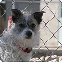 Adopt A Pet :: Tilly - Meridian, ID