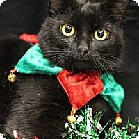 Adopt A Pet :: Sabrina - Sacramento, CA