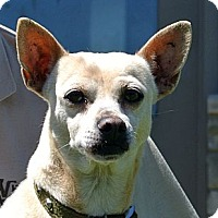 Adopt A Pet :: Odie - white settlment, TX