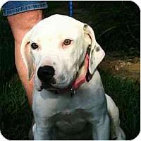 Adopt A Pet :: Effie - Kingwood, TX