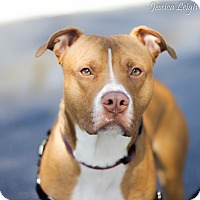 Adopt A Pet :: Major - Reisterstown, MD