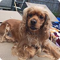 Adopt A Pet :: Bella 3yr Adopted - Mentor, OH