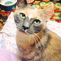 Adopt A Pet :: JENNIPURR - Burlington, NC