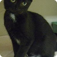 Adopt A Pet :: Toga - Hamburg, NY