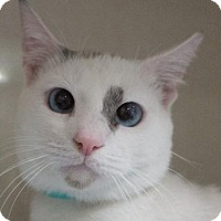 Adopt A Pet :: Sampson - Redwood City, CA