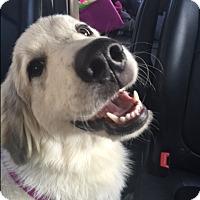 Adopt A Pet :: Maggie - Byhalia, MS