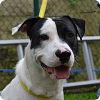 Adopt A Pet :: S/C Oreo - Miami, FL