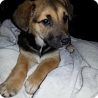 Adopt A Pet :: Nala - Rexford, NY