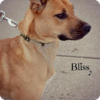 Adopt A Pet :: Bliss - Niagara Falls, NY