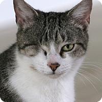 Adopt A Pet :: Kiwi - North Fort Myers, FL
