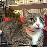 Adopt A Pet :: MeowMeow - East Stroudsburg, PA