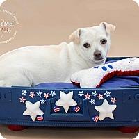 Adopt A Pet :: Louie - Apache Junction, AZ