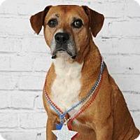 Adopt A Pet :: Tyson - Titusville, FL