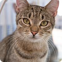 Adopt A Pet :: Gigi - Brooklyn, NY