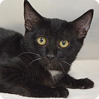 Adopt A Pet :: Poe - Dublin, CA