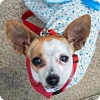 Adopt A Pet :: Peaches - San Marcos, CA