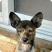 Adopt A Pet :: Rio - Oakley, CA