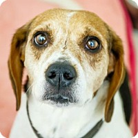 Adopt A Pet :: Bell - Oakland Park, FL