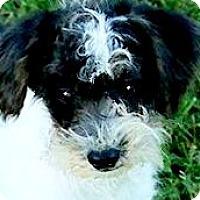 Adopt A Pet :: POLLY(ADORABLE