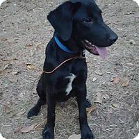Adopt A Pet :: Jax (adoption pending) - Matawan, NJ