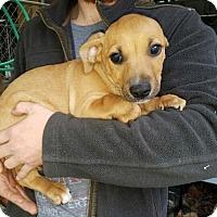 Adopt A Pet :: 9 Asher - Lakeport, CA