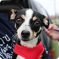 Adopt A Pet :: Josie - Lisbon, IA
