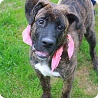 Adopt A Pet :: Marge - Poughkeepsie, NY