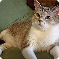 Adopt A Pet :: Gwen - Foothill Ranch, CA