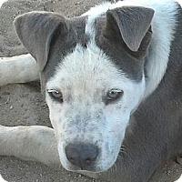 Adopt A Pet :: Pretty Boy Floyd - Costa Mesa, CA